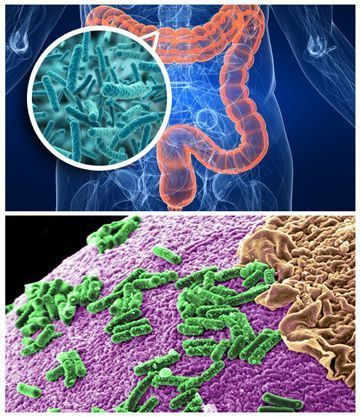flora del intestino
