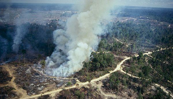 deforestación plantaciones palma y azucar