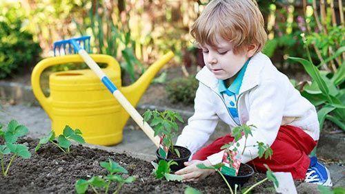 niño cultivando