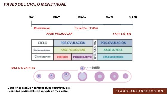 cicle menstrual